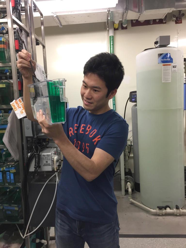ゼブラフィッシュを飼育する水槽を手に実験中の山口さん